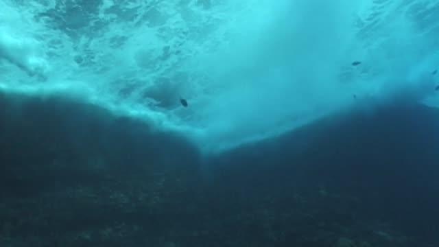 hawaii marine life - cetacea stock videos & royalty-free footage