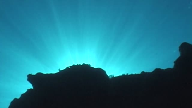 hawaii marine life - lobster stock videos & royalty-free footage