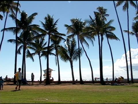 hawaii-park 02 - gemeinsam gehen stock-videos und b-roll-filmmaterial