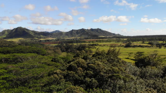 hawaii rainforest canopy - horse ranch stock videos & royalty-free footage