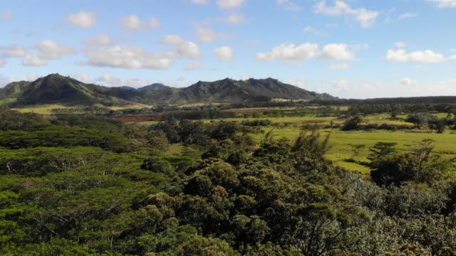 vídeos y material grabado en eventos de stock de dosel del bosque lluvioso de hawaii - rancho