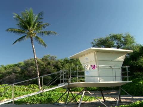 ms usa, hawaii, the big island, hapuna beach state recreation area, lifeguard tower and palm tree on beach - palma nana video stock e b–roll