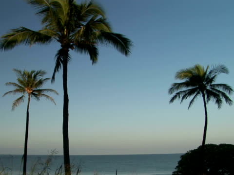 stockvideo's en b-roll-footage met ms usa, hawaii, the big island, hapuna beach state recreation area, palm trees and ocean at sunrise - waaierpalm