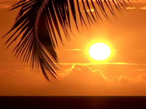 ms usa, hawaii, the big island, kailua-kona, keauhou bay, sunset over ocean - fächerpalme stock-videos und b-roll-filmmaterial
