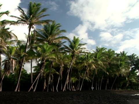 ms usa, hawaii, the big island, punaluu black sand beach park, palm trees on seashore - fan palm tree stock videos & royalty-free footage