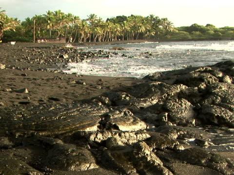 ms usa, hawaii, the big island, punaluu black sand beach park, seashore - fan palm tree stock videos & royalty-free footage