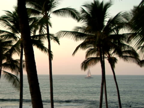 ms usa, hawaii, the big island, waialua bay, palm trees on beach, sailing boat floating on water - fächerpalme stock-videos und b-roll-filmmaterial