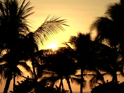 ms usa, hawaii, the big island, waialua bay, silhouettes of palm trees on beach at sunset - palma nana video stock e b–roll