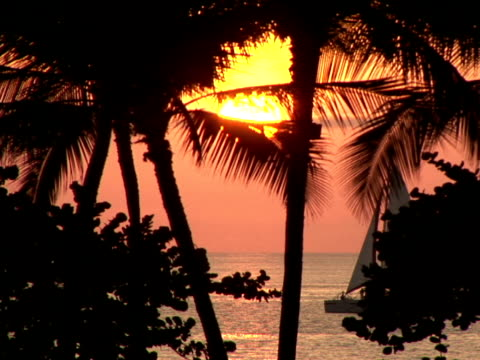 vidéos et rushes de ms usa, hawaii, the big island, waialua bay, silhouettes of palm trees on beach, sailing boat floating on water at sunset - palmier à feuilles en forme d'éventail