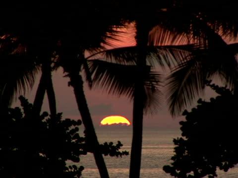 vídeos de stock e filmes b-roll de ms usa, hawaii, the big island, waialua bay, silhouettes of palm trees on beach at sunset - fan palm tree