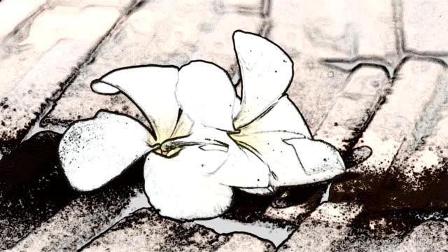 stockvideo's en b-roll-footage met hawaiian plumeria bloemen - guirlande