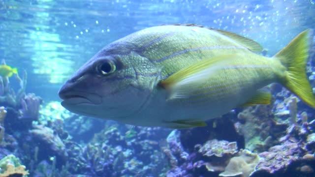 Hawaiian Reef Aquarium with Fishes