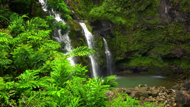 hawaiian waterfall in rainforst - cinemagraph loop - tropical climate stock-videos und b-roll-filmmaterial