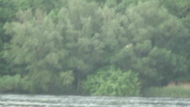 hawk angeln-hd 1080 60i / - rotmilan stock-videos und b-roll-filmmaterial