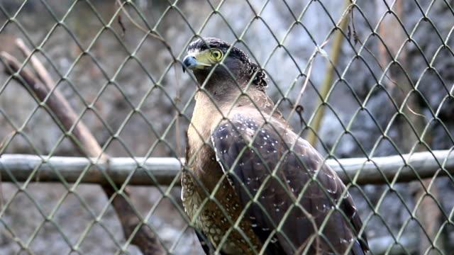 ホークのケイジ - 鳥の鉤爪点の映像素材/bロール
