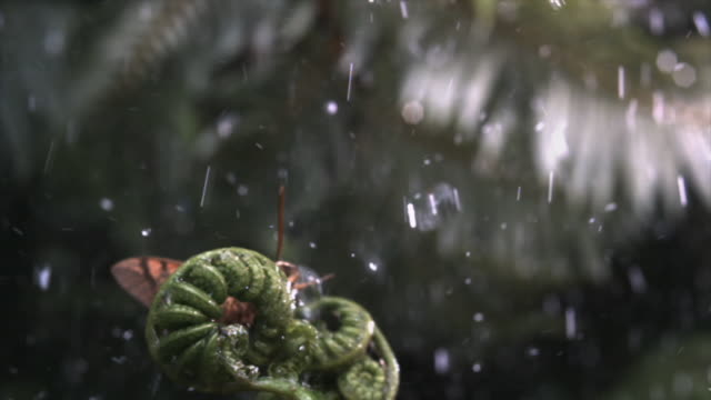 a hawk moth is blown off a fern frond during a rainstorm. available in hd. - frond stock videos & royalty-free footage