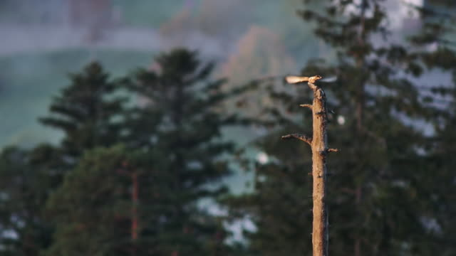 hawk on the lookout and taking off - zoology stock videos & royalty-free footage