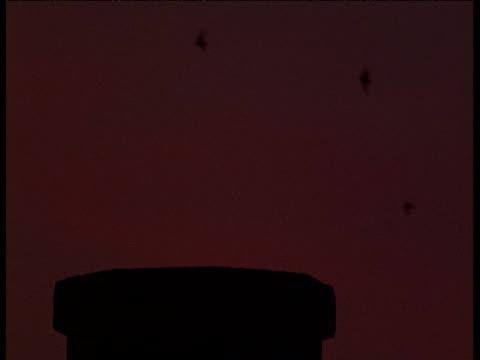 hawk swoops in and grabs vaux's swift from chimney roost, portland, oregon - portland oregon点の映像素材/bロール