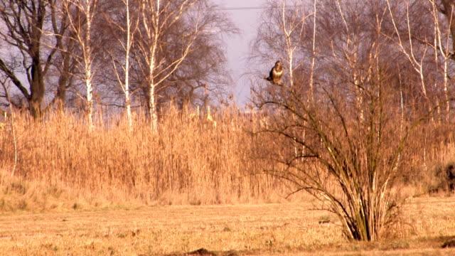 stockvideo's en b-roll-footage met hawk - dierlijke mond