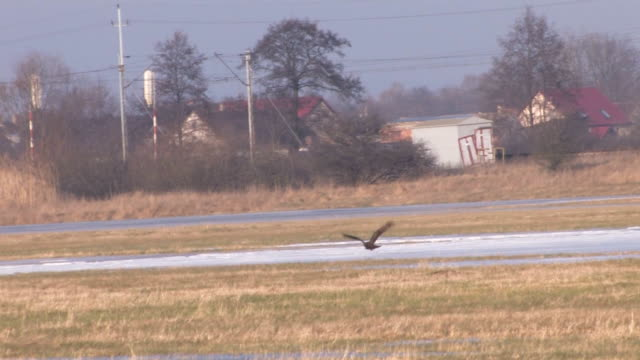 vídeos de stock, filmes e b-roll de hawk - boca animal