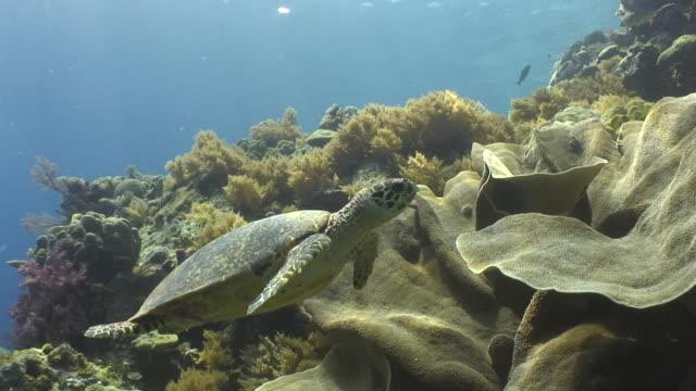 hawksbill turtle - hawksbill turtle stock videos & royalty-free footage