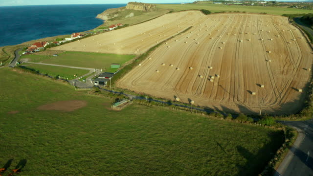 vídeos de stock, filmes e b-roll de hay bail fields & cows, cayton bay, north yorkshire, england - yorkshire