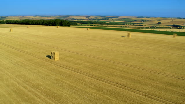 hay bails in yellow field after harvesting, north yorkshire, england - hay field stock videos & royalty-free footage