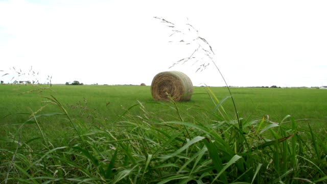 hay bale alone in field under clear sky in afternoon sunlight - hay isolated stock videos & royalty-free footage