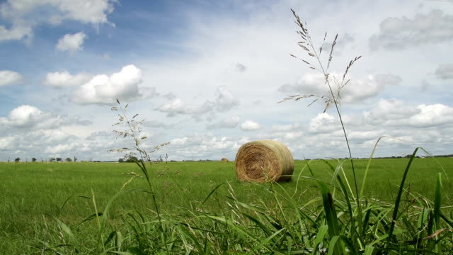 hay bale under wide open blue sky with clouds - hay isolated stock videos & royalty-free footage