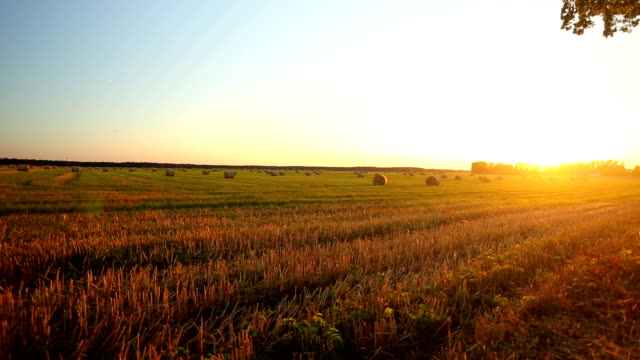 bales fieno al tramonto - fieno video stock e b–roll