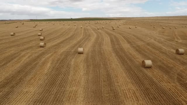 hay bales in the open field - crop stock videos & royalty-free footage