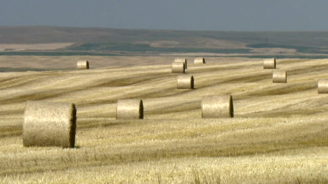 ws hay bales in wheat fields, near lethbridge, alberta, canada - haystack stock videos & royalty-free footage