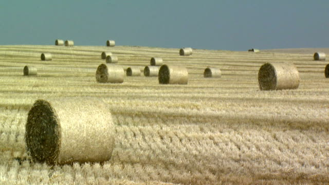 ws hay bales in wheat fields, near lethbridge, alberta, canada - alberta stock videos & royalty-free footage