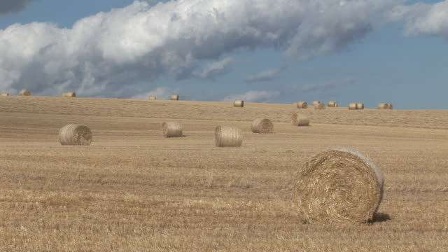 ws, hay bales on field - hay isolated stock videos & royalty-free footage