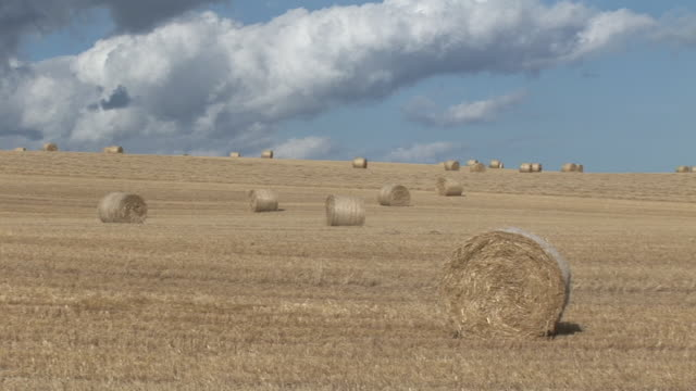 ws, pan, hay bales on field - hay isolated stock videos & royalty-free footage