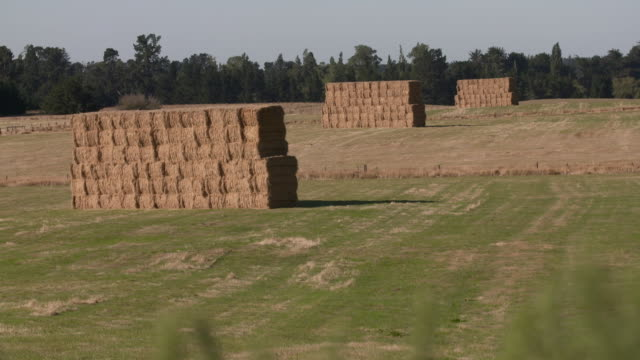 hay bales staked in a pile on farm - haystack stock videos & royalty-free footage