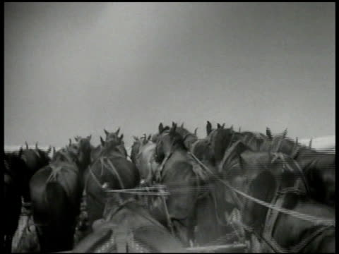 hay being lifted by machine up into air large team of horses hay being piled on tall stack bales of cotton in warehouse workers moving bale plate of... - hay stack stock videos & royalty-free footage