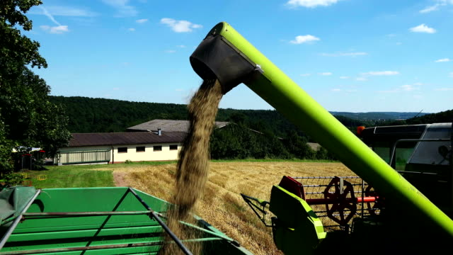 Hay falling down from machinery