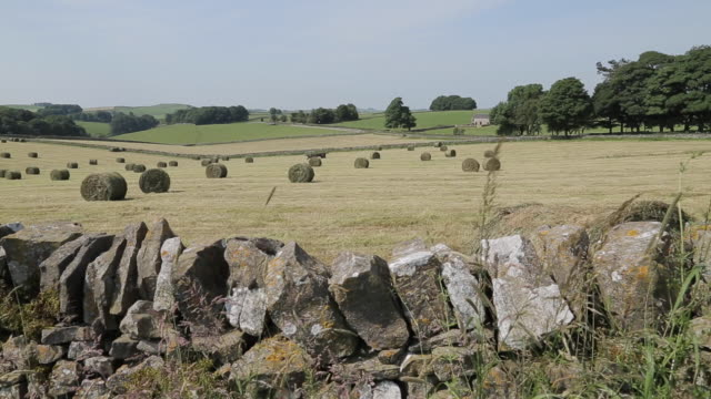 hay field near tissington, peak district national park, derbyshire, england, uk, europe - stone wall stock videos and b-roll footage