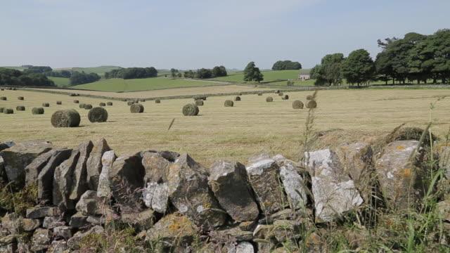 hay field near tissington, peak district national park, derbyshire, england, uk, europe - stone wall stock videos & royalty-free footage