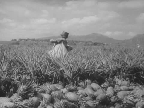 hay making/ pineapple harvesting/ can fruits shipping - hawaii islands stock videos & royalty-free footage