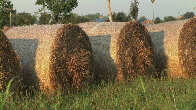 vídeos de stock, filmes e b-roll de hay no meadow - grupo médio de objetos