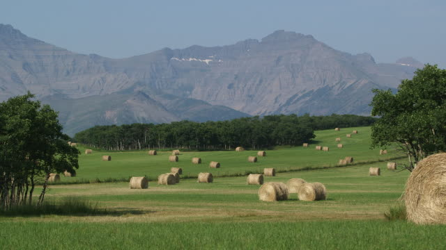 hay rolls in field by mountain. - alberta stock videos & royalty-free footage
