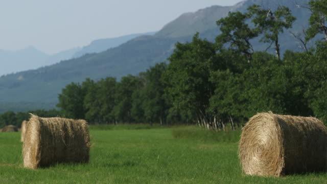 Hay rolls in field.