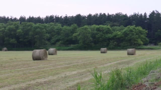 hay stack in japan - hay stack stock videos & royalty-free footage