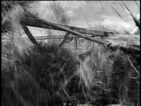vídeos y material grabado en eventos de stock de hay wagon in field / farmers using pitchforks / pitching hay onto wagons / wagons being pulled by animals - bieldo equipo agrícola