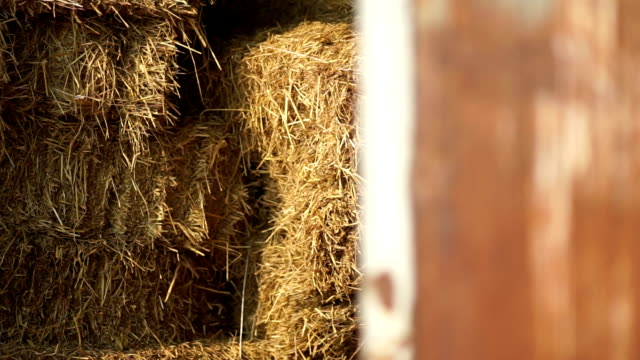 haystack in old wooden barn. - fieno video stock e b–roll