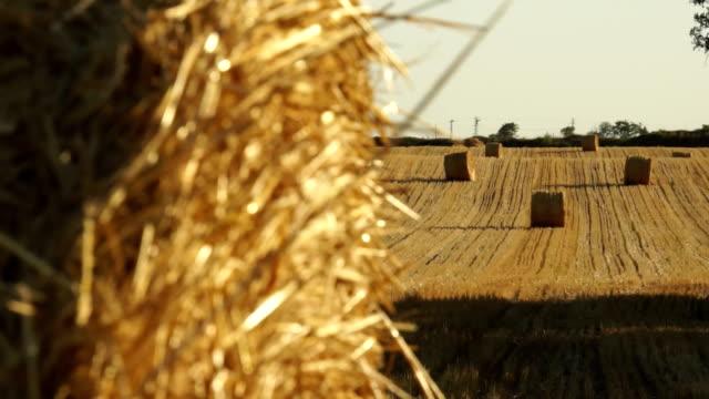 Haystacks on the field 1