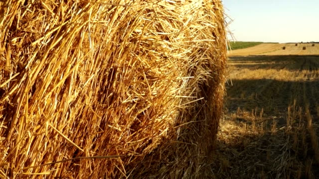 Haystacks on the field 2