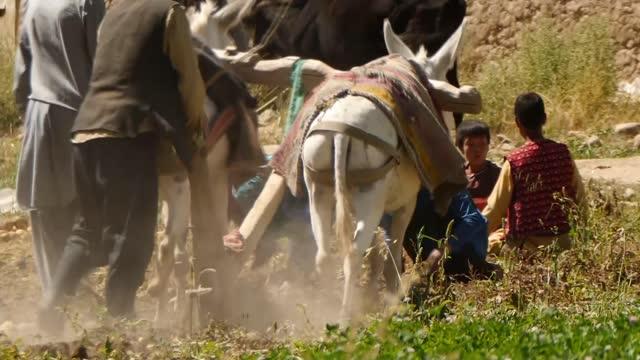hazara minority fearful of future under taliban rule; afghanistan: bamiyan: ext various shots of farming village at work. - politics stock videos & royalty-free footage